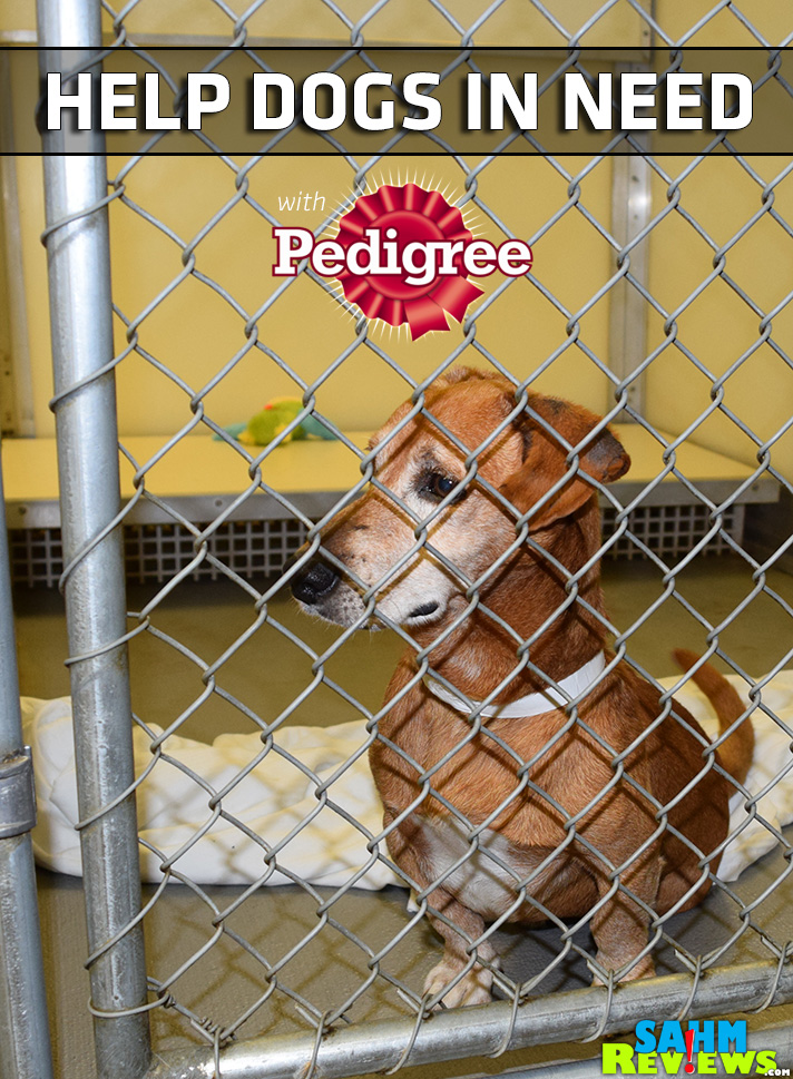 October is Pet Adoption Month, but even if you can't adopt a dog at this time, you can still make a difference by donating to your local shelter. Join #PedigreeGives and SahmReviews.com in making sure our pets are well taken care of.