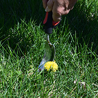 Lawn Care Tips - Dandelion Puller