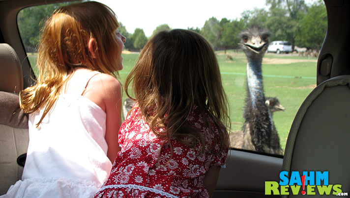 Get up close with the animals without leaving your car when you visit Harmony Park Safari Zoo in Huntsville, Alabama. - SahmReviews.com