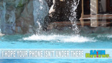 What To Do If Your Phone Takes a Dip