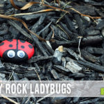 Easy craft tutorial: DIY Pet Rock Ladybugs. - SahmReviews.com