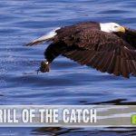 Eagles are beautiful creatures! Learn about eagle hunters in Sony's documentary The Eagle Huntress. - SahmReviews.com (© 2010 - Richard Nagle)