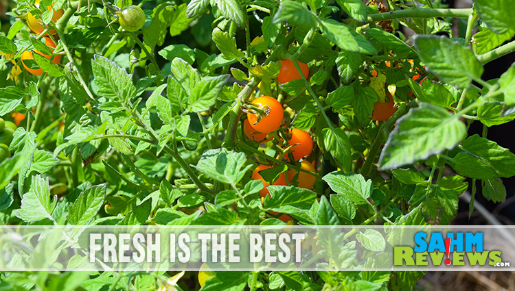 Beginner's Guide to Tomato Plant Care