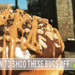 They say you can buy anything you want off of Amazon. This list proves it. Who knew there were so many edible insects available for Prime shipping?! - SahmReviews.com